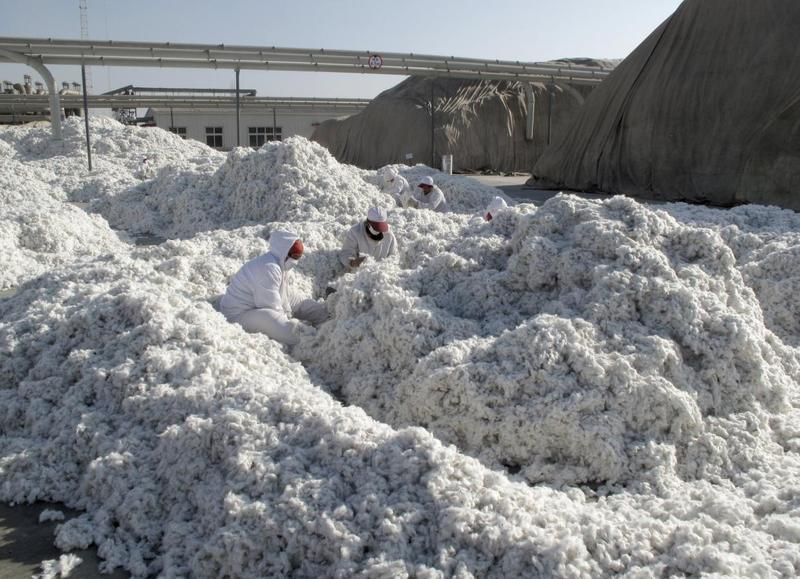 Over 570,000 Uighurs involved in China cotton coerced labor
