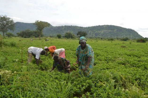 Choice and Opportunity for African Farmers Will Transform Africa