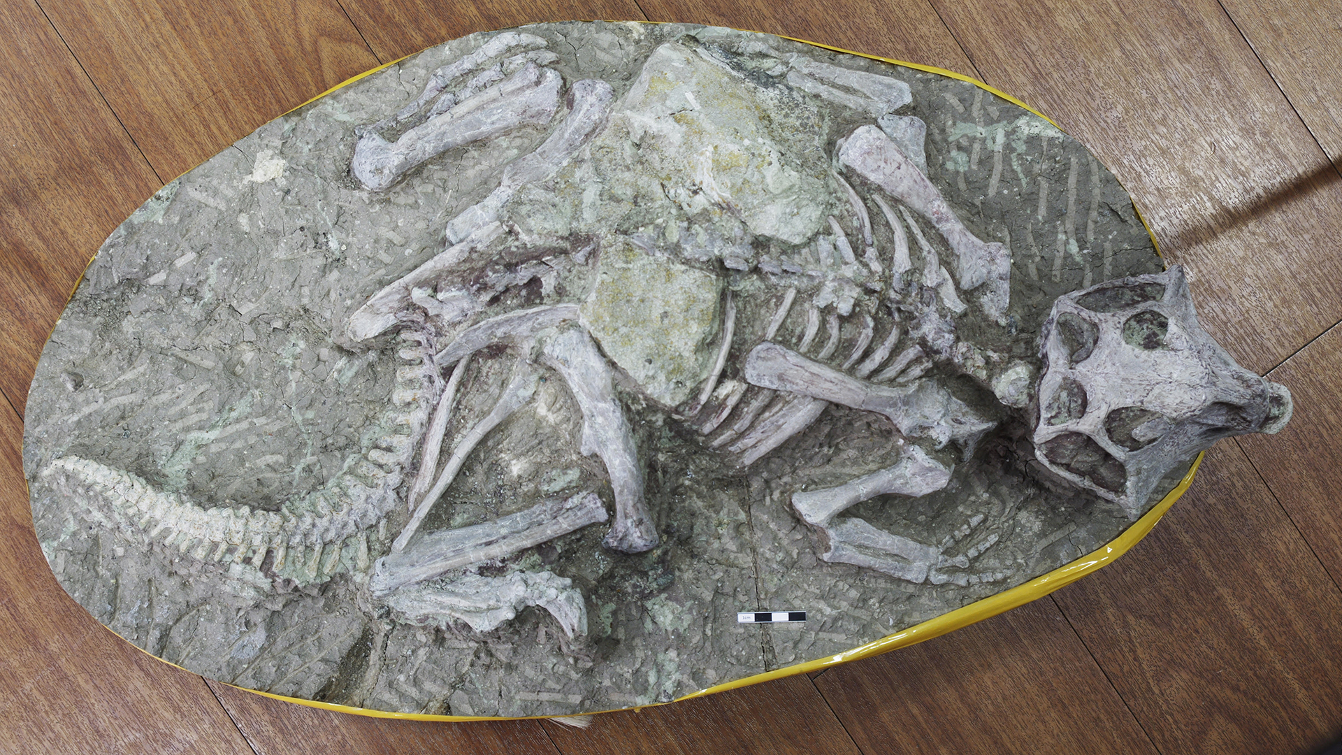 Stunningly preserved 'Cretaceous Pompeii' fossils may not be what they seem