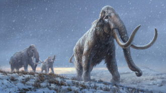 The oldest animal DNA ever recovered reveals mammoths' evolution