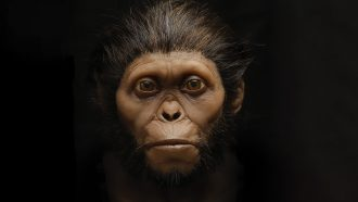 New depictions of ancient hominids aim to overcome artistic biases