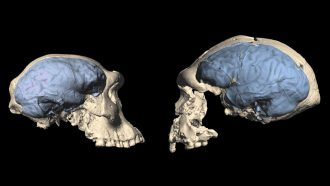 Ancient humans may have had apelike brains even after leaving Africa