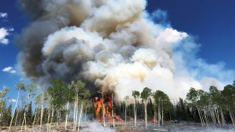 Wildfires launch microbes into the air. How big of a health risk is that?
