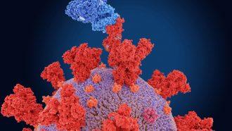 Here's what we know about B.1.1.7, the U.S.'s dominant coronavirus strain