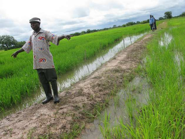 Africa Can Be Self-Sufficient in Rice Production