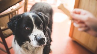 Would dogs return the favor if you gave them treats? It's complicated
