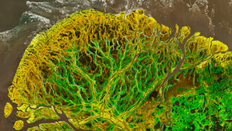 A stunning visualization of Alaska's Yukon Delta shows a land in transition