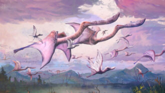 Pterosaurs may have been able to fly as soon as they hatched