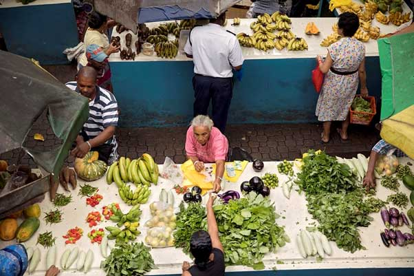 Fundamental Changes Needed at UN Summit to Tackle Global Food Insecurity