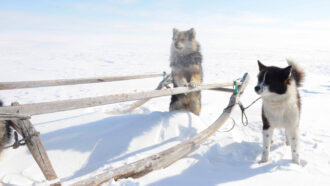 Dog DNA reveals ancient trade network connecting the Arctic to the outside world