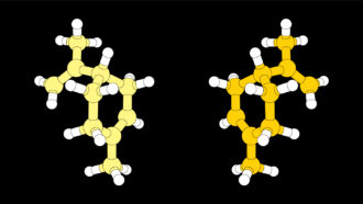 An easier, greener way to build molecules wins the chemistry Nobel Prize