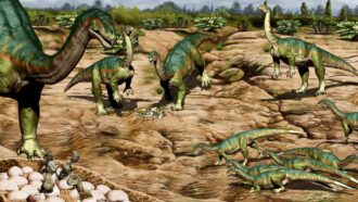 Some dinosaurs may have lived in herds as early as 193 million years ago